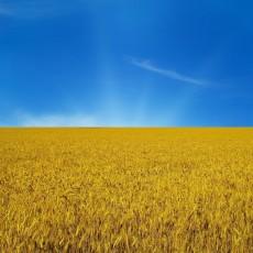 ТОП-25 сайтов Украины